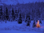 Christmas in Wilderness