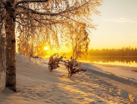 Winter Sunset - snow, sunset, forest, trees, nature, lake