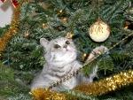 Kitty on a Christmas Tree