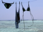 monica hansen beachwear clothesline