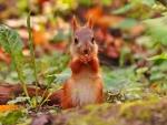 Squirrel's Winter Preparation