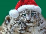 Christmas Playmates