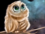 Sweet green eyed Owl