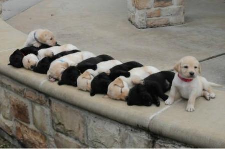 Sweetie Puppies