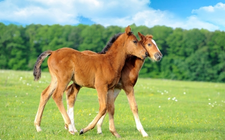 Two Foals - farm, foals, cavalo, caballos, horse, animals, friends