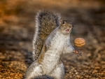 Playing the nut