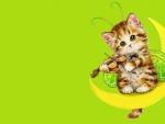 Kitten fairy