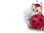 Ladybug kitten