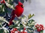 Cardinal Holly