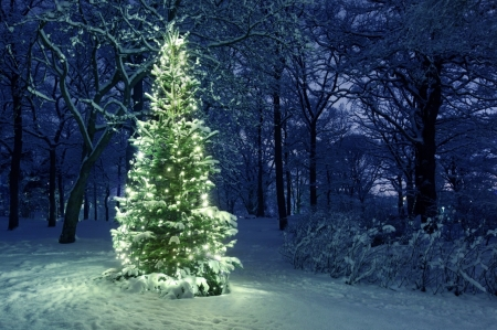 Christmas Tree - Fairy lights, Christmas, Christmas tree, Holidays, Nature, Winter, Trees, Snowy trees, Snow, Park