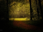 The Light from the Edge of the Forest