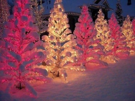 Christmas Trees in Snow - photography, christmas, snow, beauty, trees, pink, outdoor