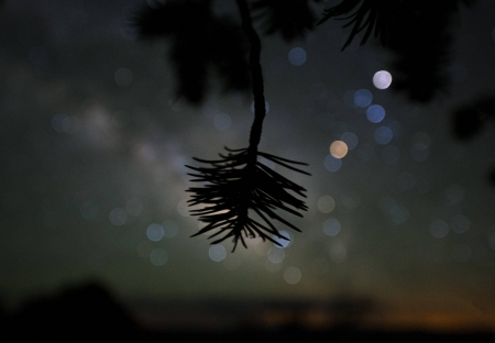Star Colors and Pinyon Pine - stars, fun, cool, nature, tree, space