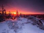 Winter magic light
