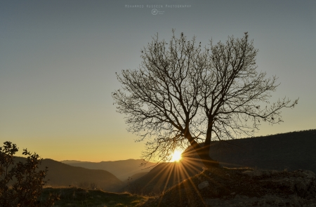 Sunset In Kurdistan - kurd, kurdistan, sunset, forest, sunshine, duhok, nature, tree