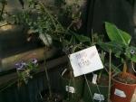 Plants In Rehab