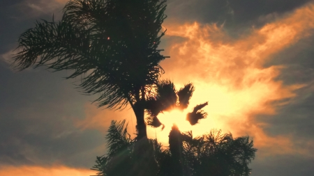 Fiery Sky - Sky, Palms, Sundown, Fire