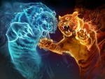 Cold and Hot fight