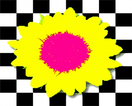 Checker Sunflower Flowers Nature Background Wallpapers