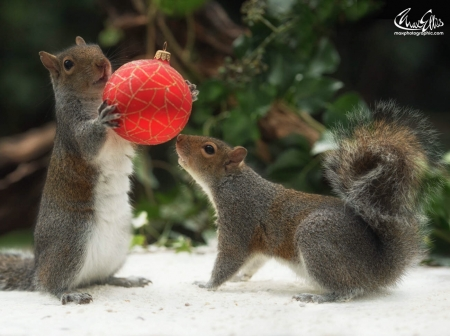 Just when you thought it was all over squirrels - Funny squirrel backgrounds ...