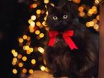 Christmas Kitty ♥