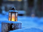 Winter Glow ♥