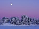 Full moon over frozen pines