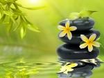 Yellow Zen