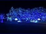 christmas 2 - blue lights