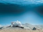 underwater sea shells