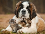 Dog and Kittens