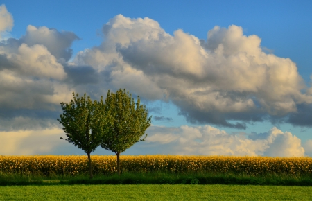 Trees - landscape, trees, nature, sky