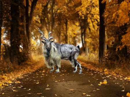 Markhor Sheep Animals Background Wallpapers On Desktop Nexus Image 2065974