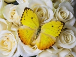 ✿⊱•╮Yellow Butterfly╭•⊰✿