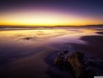 Amazing Purple Shore