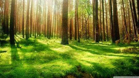 Shades & forests - forest, green, grass, fresh, silhouettes, shadows, nature, trees