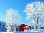 Frozen Landscape
