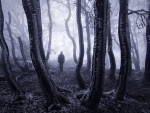 Alone in the Forest