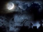 Backlit Grey Wolf Howling