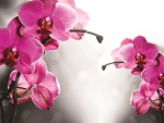 Pink orchids background