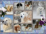 For all you dog lovers.A mixs of dogs in the snow ..