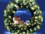 Dream of Kitten