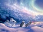 Winter Rabbits
