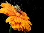frog on orange flower