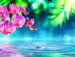 Reflection of pink orchids