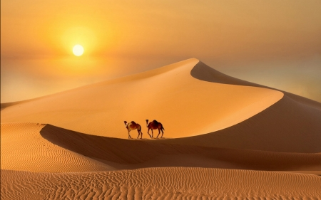 Desert at Sunset - camels, desert, sand, sunset