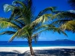 low palm tree on the beach