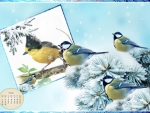 Februry Birds