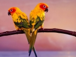 Lovely Birds