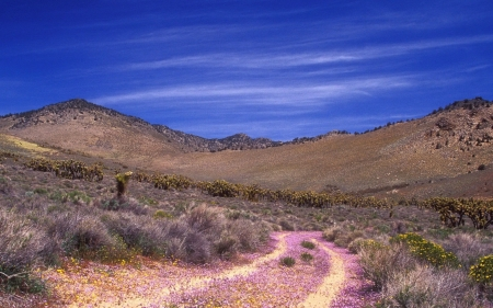 desert road - grass, desert, hill, road